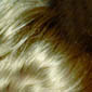 French Vanilla Blonde accented with Medium Golden Brown