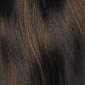 Chestnut Brown with Golden Brown highlights